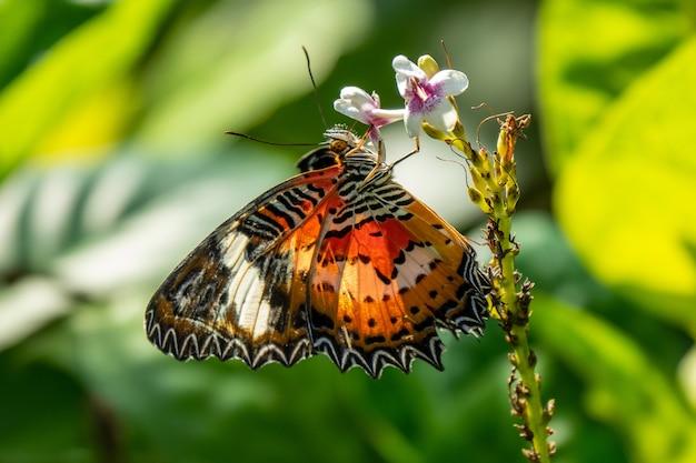 Foto de foco seletivo de uma linda borboleta sentada em um galho com pequenas flores Foto gratuita