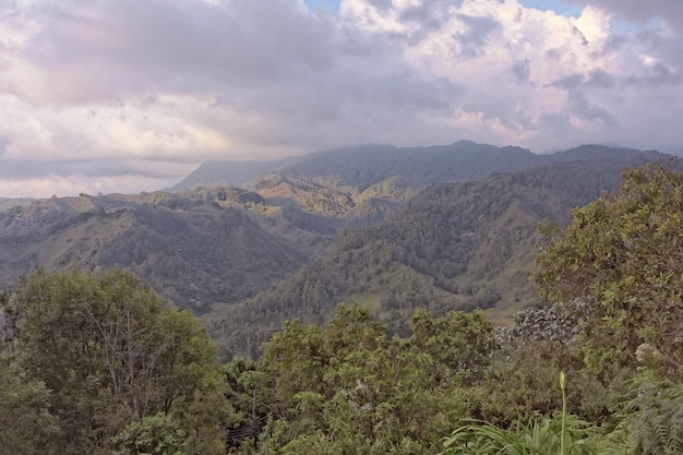 Foto de grande angular de árvores e florestas em uma montanha durante o dia Foto gratuita