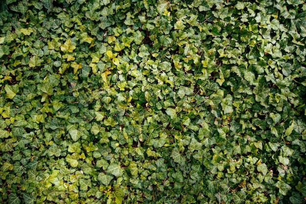 Foto de o pincel verde, folhas pequenas, planta fresca Foto Premium