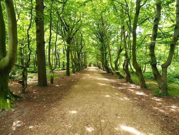 Foto de paisagem de um caminho largo com linhas verdes de árvores Foto gratuita