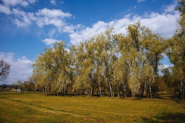 Foto de um pouco arquivado no parque, bela natureza, ninguém Foto Premium