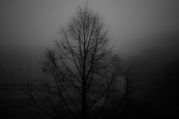 Foto em escala de cinza de uma árvore nua em um parque coberto de névoa Foto gratuita