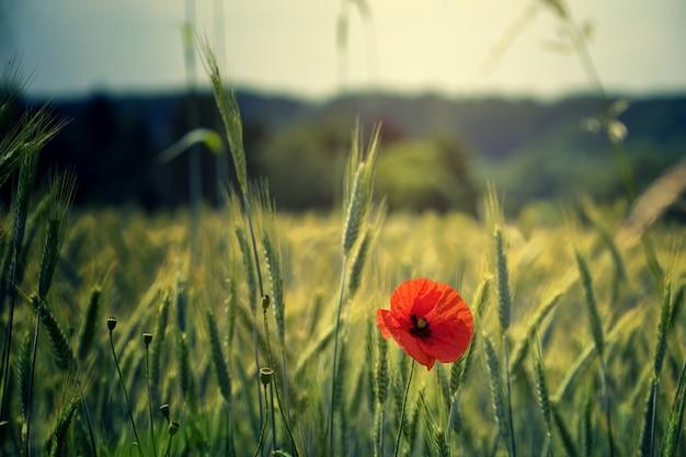Foto em foco raso de flor vermelha Foto gratuita