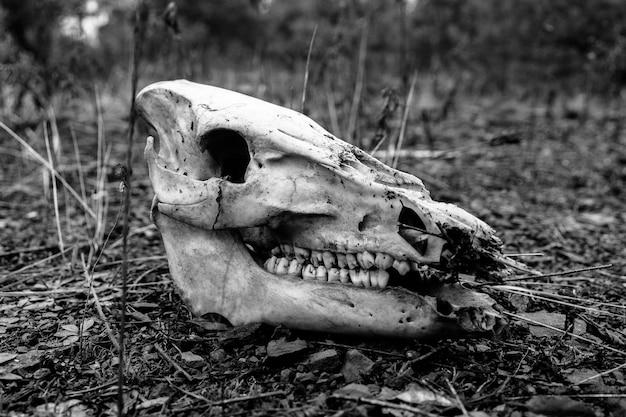 Foto em preto e branco de um crânio de animal no chão Foto gratuita