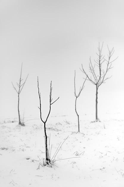 Foto em tons de cinza de árvores sem folhas em uma área de neve com um fundo nebuloso Foto gratuita