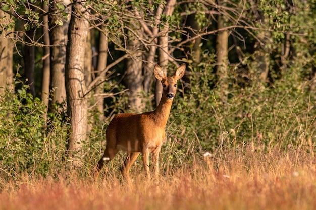 Foto grande angular de um cervo atrás de uma floresta cheia de árvores Foto gratuita