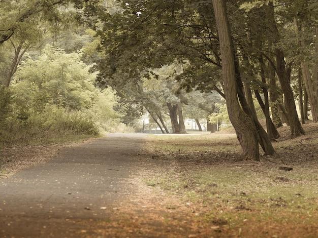 Foto grande angular de uma passarela por entre as árvores da floresta Foto gratuita