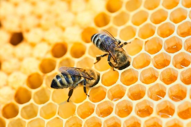 Foto macro de uma colmeia de abelhas em um favo de mel com copyspace. as abelhas produzem mel fresco e saudável. Foto Premium