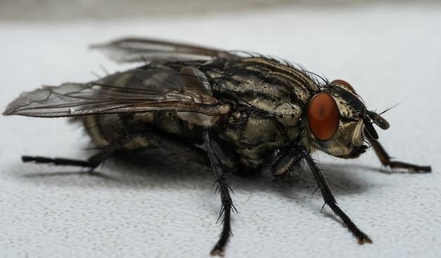 Foto macro de uma mosca Foto Premium