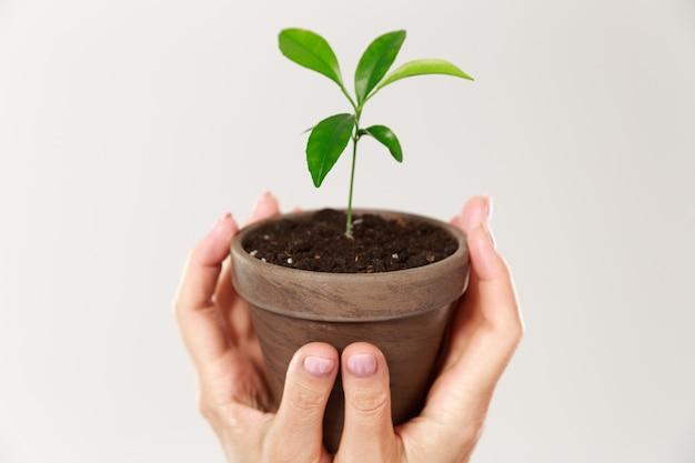 Foto recortada das mãos da mulher segurando um pote marrom com planta jovem Foto gratuita
