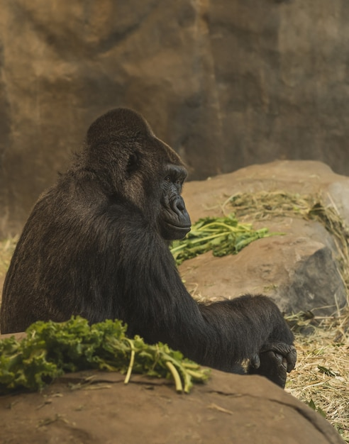 Foto vertical da vista lateral de um gorila sentado perto de rochas Foto gratuita