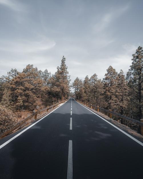 Foto vertical de alto ângulo de uma rodovia cercada por árvores sob um céu nublado e cinza Foto gratuita