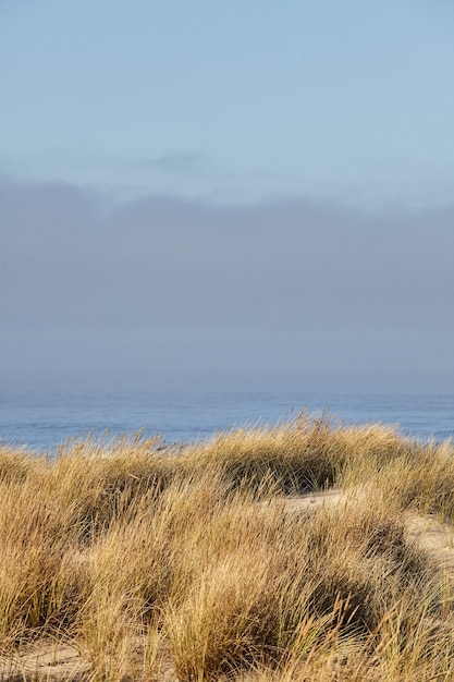 Foto vertical de grama da praia pela manhã em cannon beach, oregon Foto gratuita