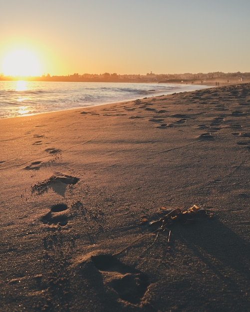 Foto vertical de pegadas no mar brancas com o sol brilhando Foto gratuita