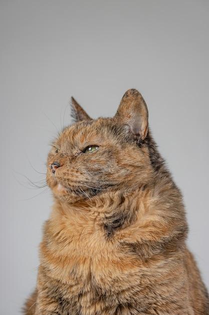 Foto vertical de um gato laranja mal-humorado Foto gratuita