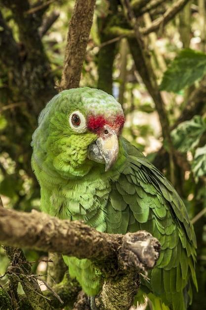 Foto vertical de um periquito na floresta em um galho de árvore Foto gratuita