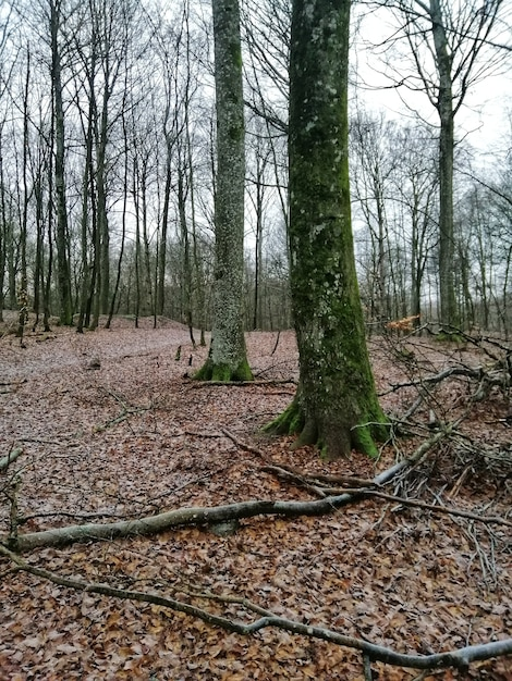 Foto vertical de uma floresta cheia de árvores altas em larvik, noruega Foto gratuita