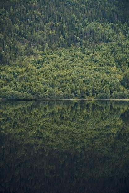 Foto vertical do reflexo de uma bela montanha coberta de árvores em um lago calmo na noruega Foto gratuita