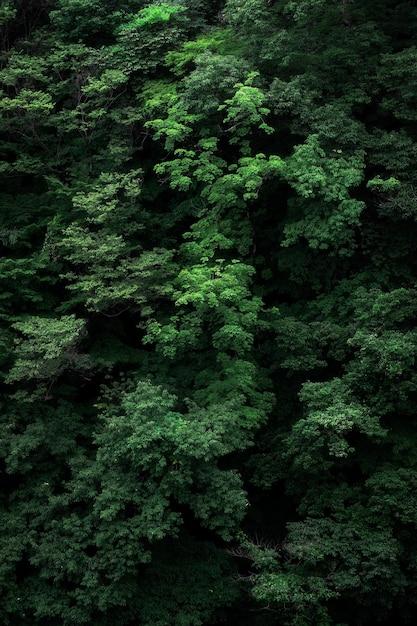 Foto vertical dos ramos de uma árvore verde perfeita para o fundo Foto gratuita