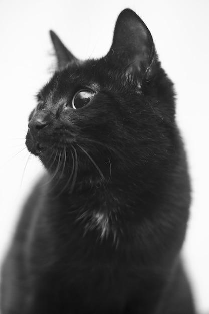 Foto vertical em tons de cinza de um gato preto com olhos fofos Foto gratuita