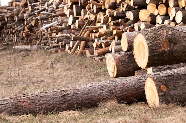 Fotografado de perto colhido para processamento de madeira. floresta. primavera Foto Premium