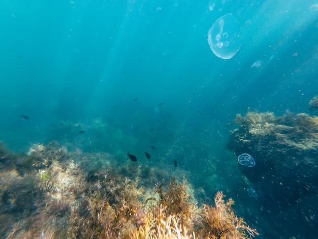 Fotografia do fundo do mar, vida selvagem subaquática Foto Premium