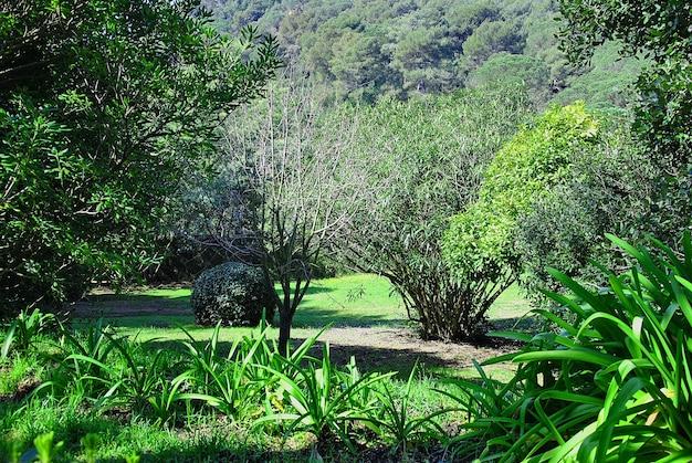 Fotografia tirada em uma floresta exuberante na primavera Foto Premium