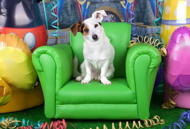 Fotos de carnaval com um jack russell em uma poltrona verde Foto Premium