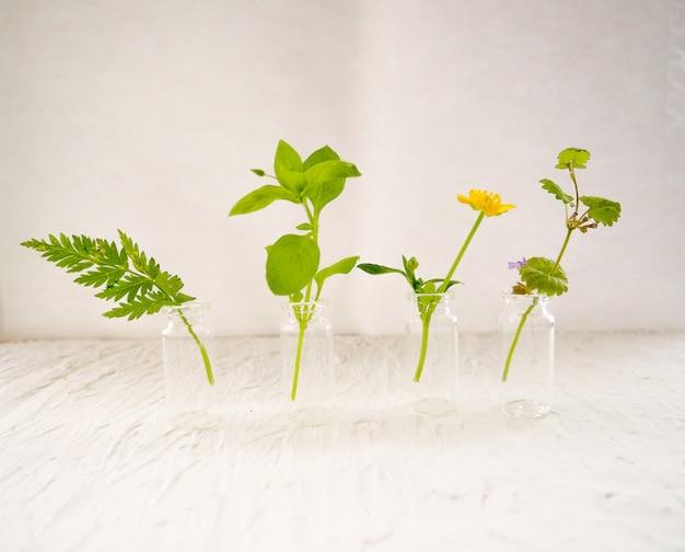 Frasco de óleo essencial com sálvia fresca de ervas, configuração com plana leigos na mesa de madeira azul. medicina alternativa, saúde, vitaminas Foto Premium