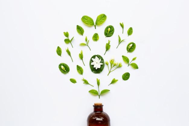 Frasco do petróleo essencial com flor e folhas do jasmim no branco. Foto Premium