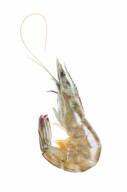 Frescos camarão / camarão em fundo branco Foto gratuita