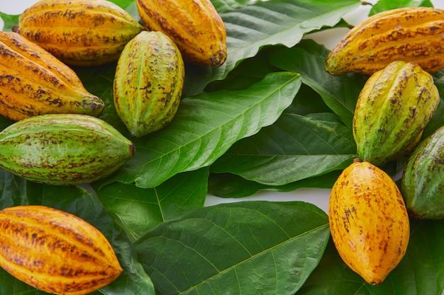 Frutas frescas de cacau com folha verde sobre fundo branco Foto Premium