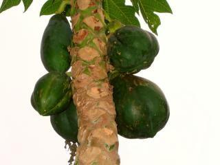 Fruteira com frutas verdes Foto gratuita