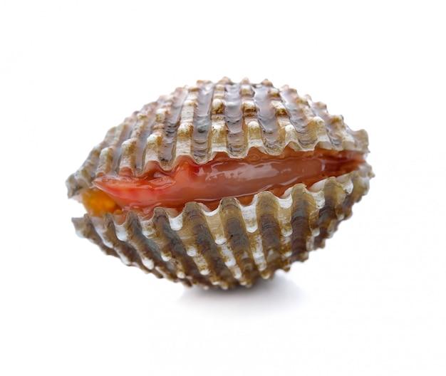 Frutos do mar frescos berbigão branco Foto Premium