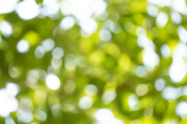 Fundo abstrato de vegetação. Foto Premium