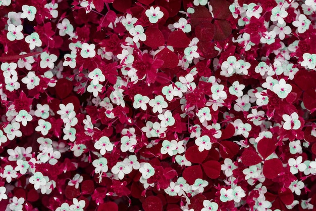 Fundo abstrato primavera de pequenas flores brancas em um pasto com grama vermelha, vista superior Foto Premium