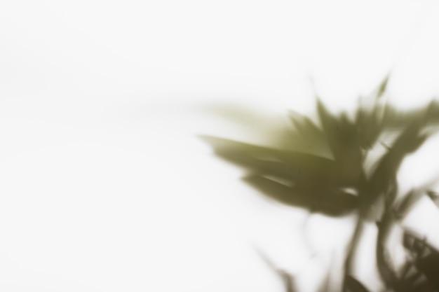 Fundo abstrato sombra de folhas naturais Foto gratuita