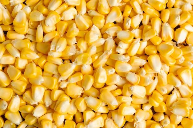 Fundo amarelo dos grãos. Foto gratuita