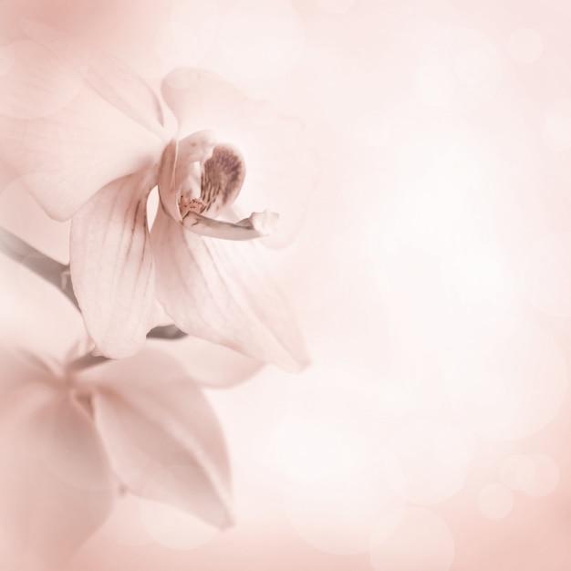 Fundo com flores da orquídea Foto Premium