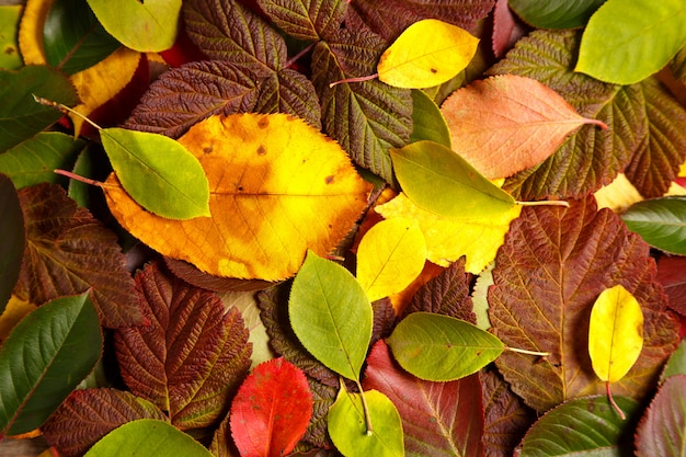 Fundo com folhas coloridas de outono Foto Premium