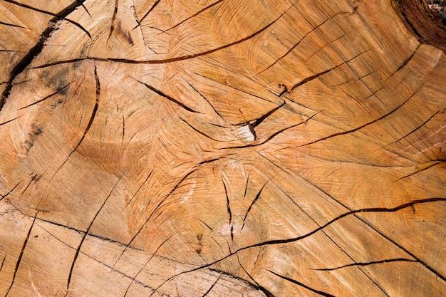 Fundo com textura de casca de troncos Foto Premium