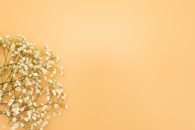 Fundo cor-de-rosa pastel bonito floral. flores pequenas brancas. flores gypsophila. flat lay, vista de cima, copie o espaço Foto Premium