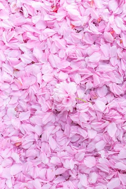 Fundo da mola natural com pétalas cor-de-rosa de uma flor da cereja. pétalas deitadas na rua. Foto Premium