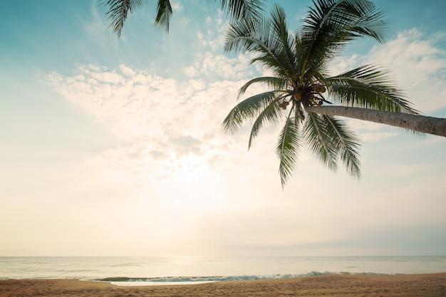 Fundo da natureza do vintage - paisagem da palmeira do coco na praia tropical no verão. Foto Premium