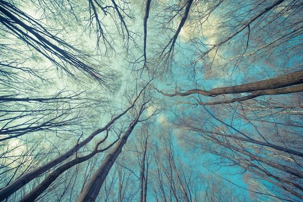 Fundo da web de árvores Foto gratuita