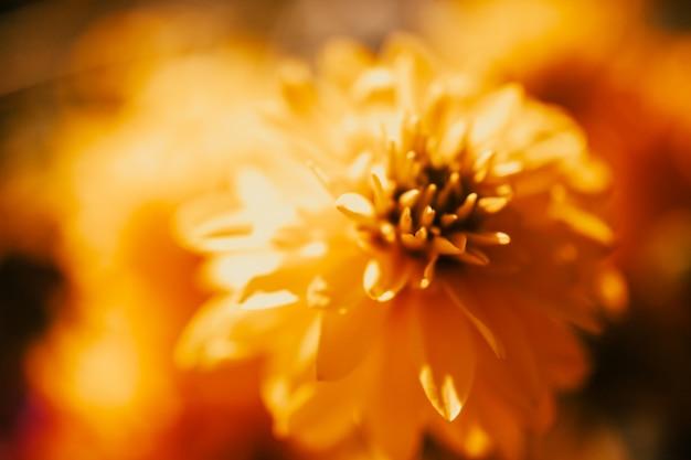 Fundo de arte floral. Foto Premium