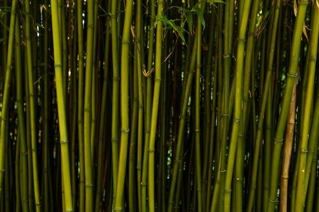 Fundo de bambu fresco Foto Premium