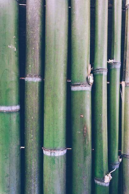 Fundo de bambu verde Foto Premium