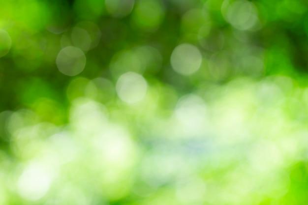 Fundo de bokeh com luz do sol através das árvores Foto Premium