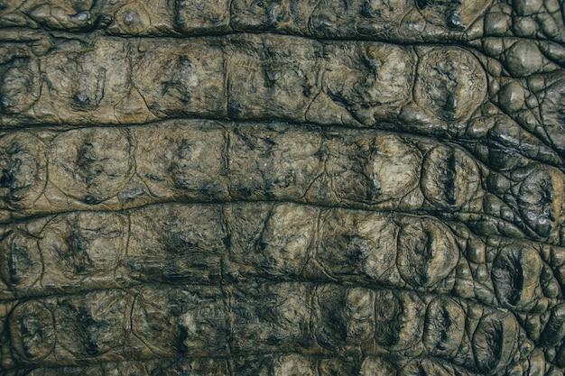 Fundo de closeup de textura de couro de crocodilo Foto Premium